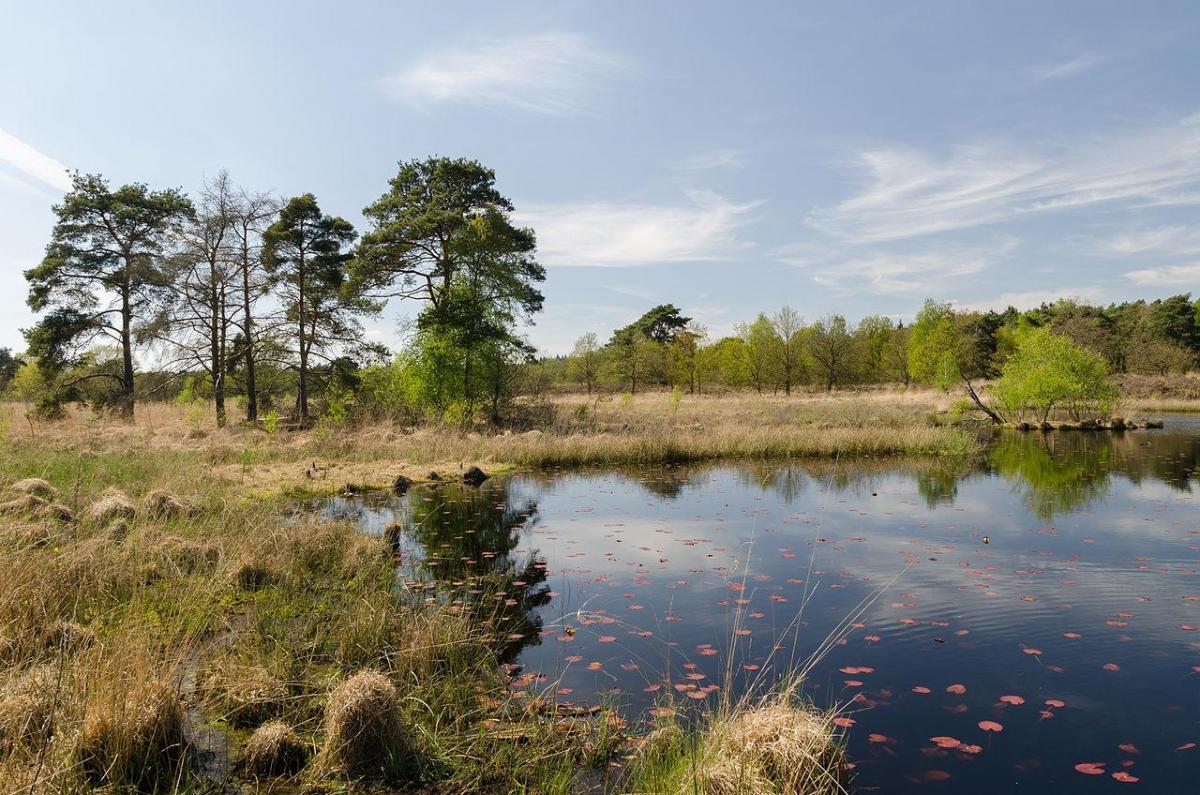 Oostappen Park Boschbeek